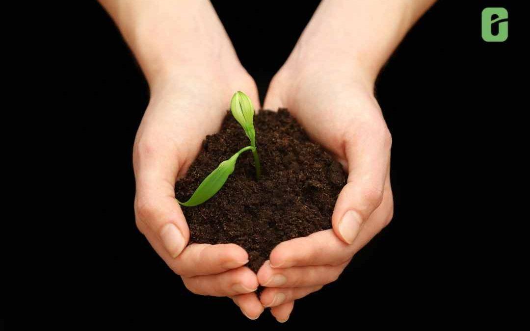 Consejos para cuidar el suelo de tu cultivo