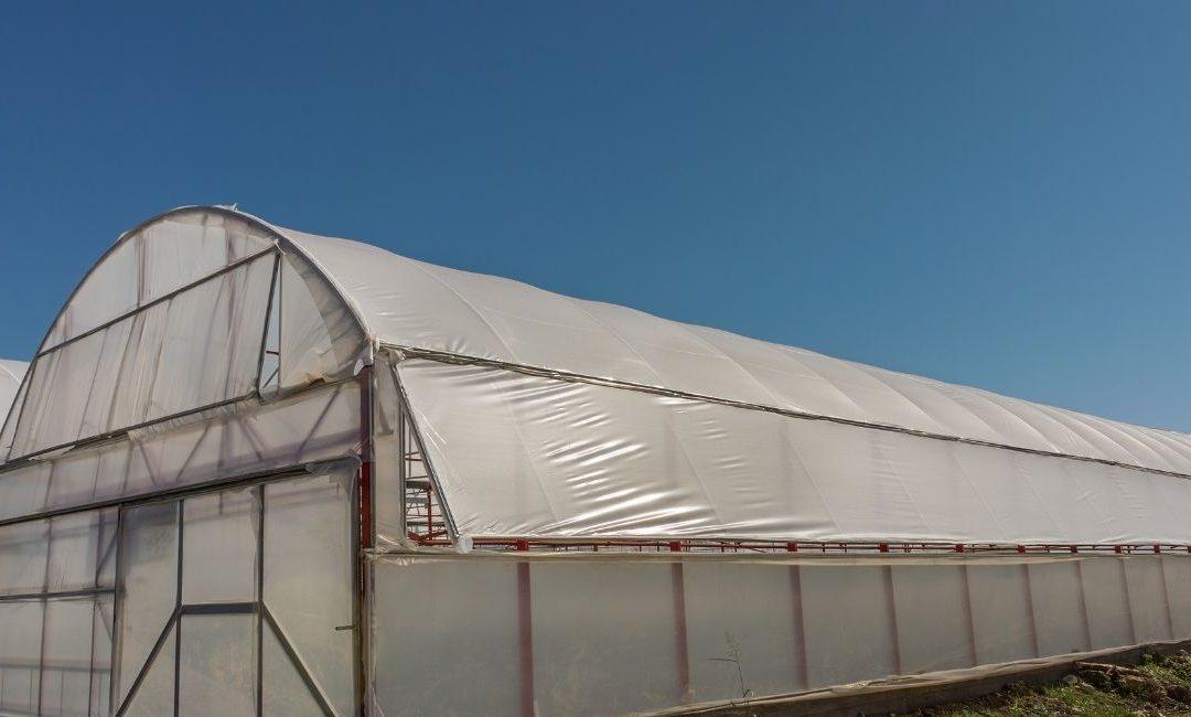 El invernadero, considerado uno de los sistemas agrícolas más sostenibles