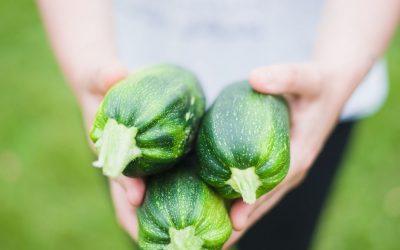 Más de una década cultivando calabacín