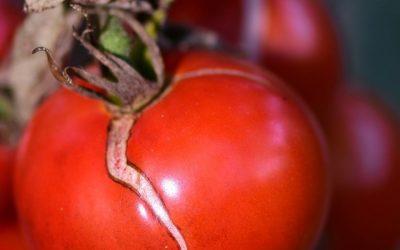 ¿Qué es el cracking en las hortalizas y cómo evitarlo?