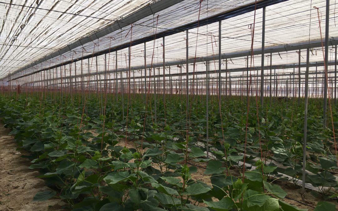Almería, líder en exportaciones de hortalizas durante el 2019