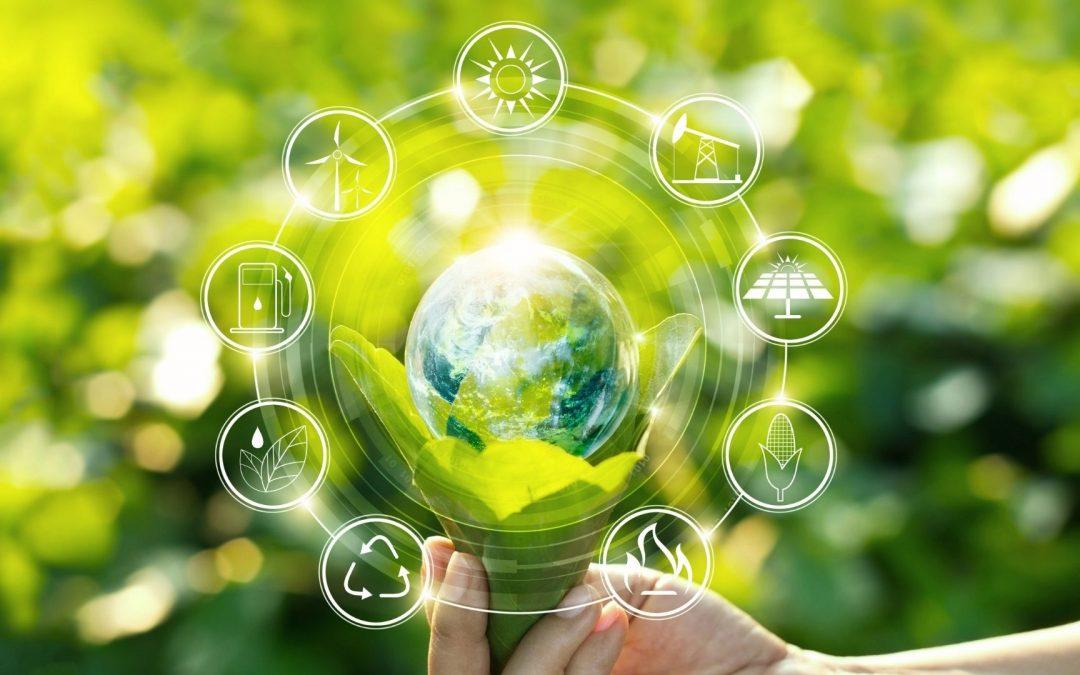 Ecoinver comercializa con hortalizas ecológicas y de calidad