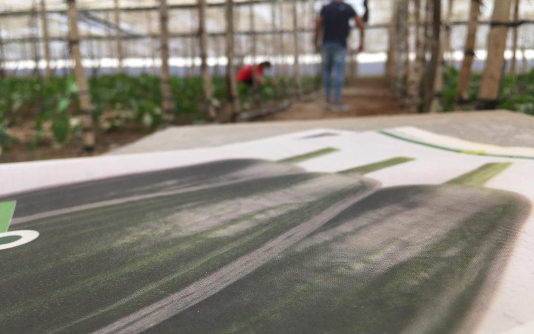 Los invernaderos de Almería producen hortalizas sanas en tiempos de Covid